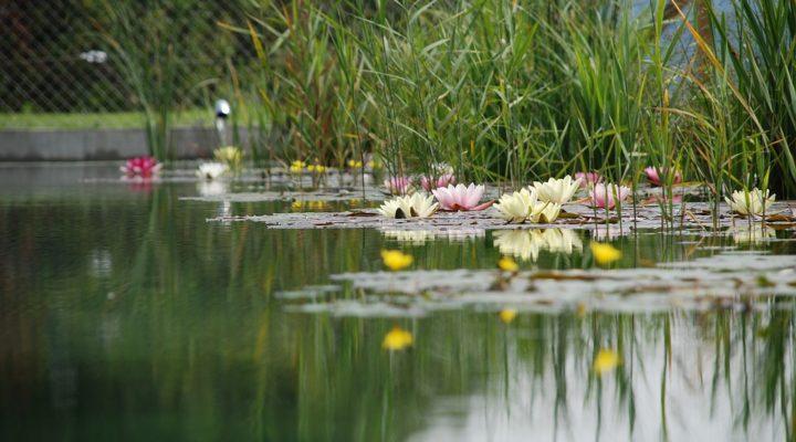 001-bioschwimmteiche